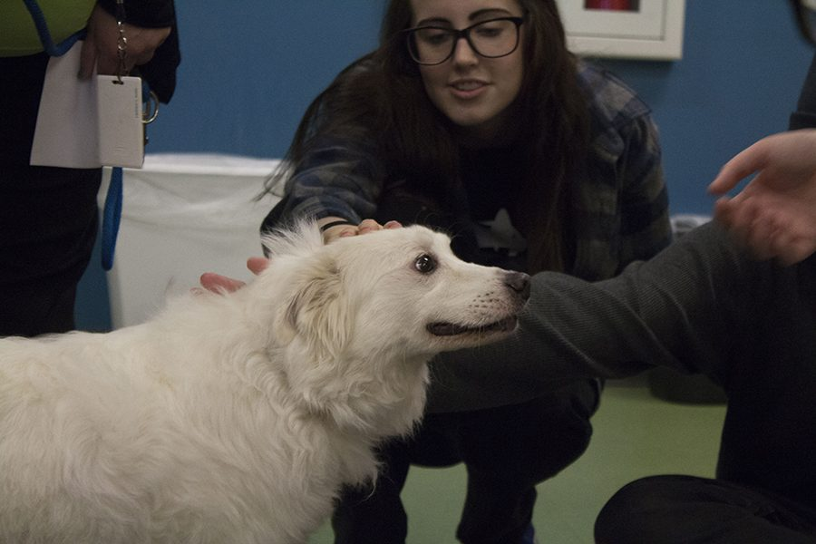 Sophomore Bailey Griffin volunteered with NAHS at the Kansas Humane Society, to help pets get adopted.