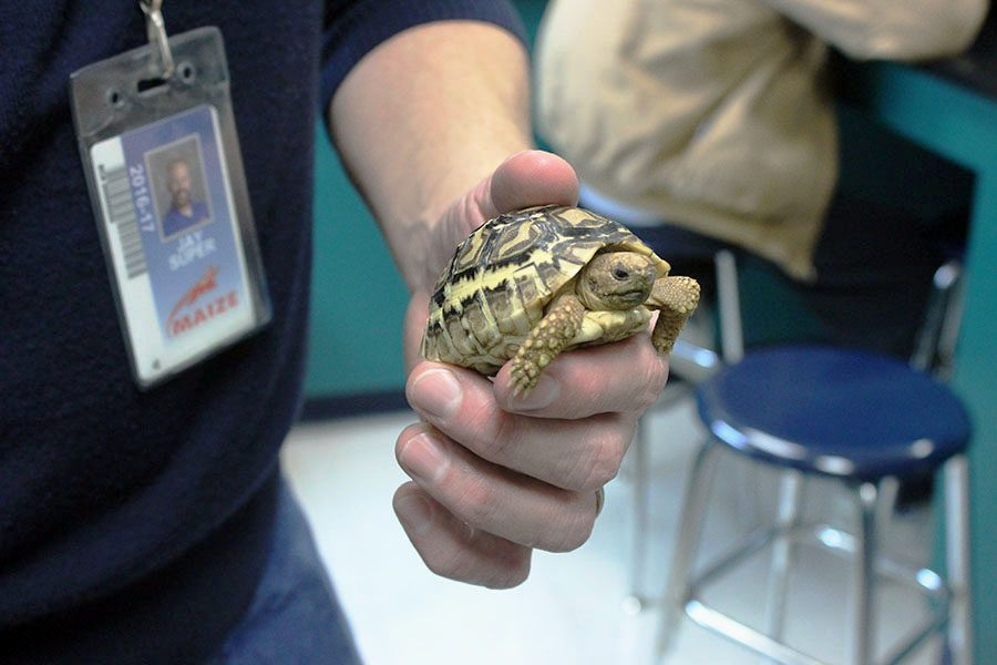 Jay Super will have to wait until his new tortoise is a little older to name it. It's too small to determine its sex.