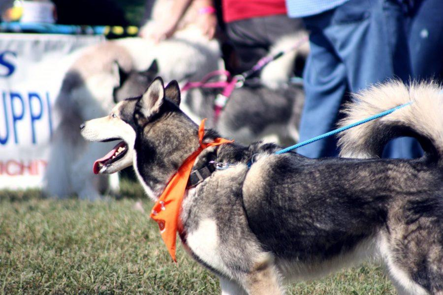 More than 100 breeds of dogs were seen at the annual Woofstock festival on Saturday Oct. 5.